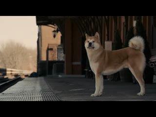 Вечная память верному псу Хатико.